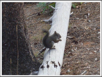 Squirrel at Sprague Lake