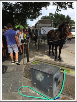 Mule watering trough for carriage rides through the French Quarter