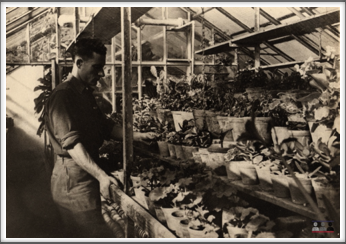 John Creech in his greenhouse at Oflag 64.  Photo published in a 1946 issue of Better Homes & Gardens