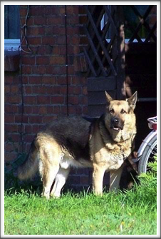 I read several reports about the guard dogs at Oflag 64.